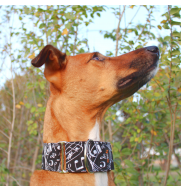 MARTINGALE MUSIC dog collar