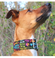 MARTINGALE dog collar BEST...