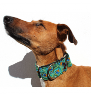 MARTINGALE PEACOCK dog collar